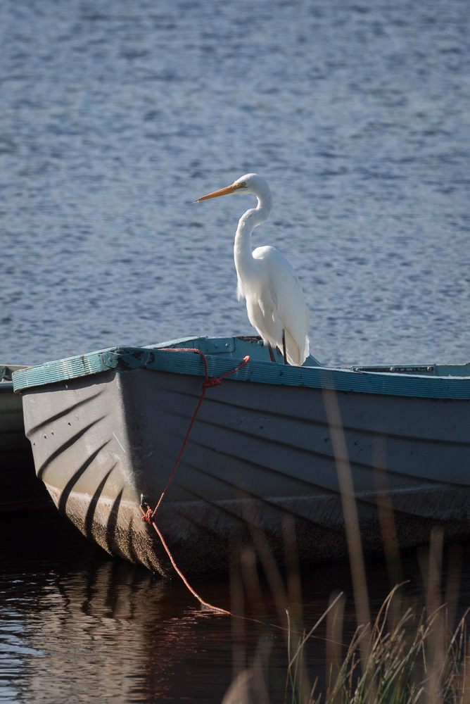 egret sitting on a boat on a lakeside